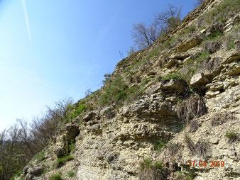 Viele von Natur aus waldfreie Geotope, Lebensraum hochseltener Arten