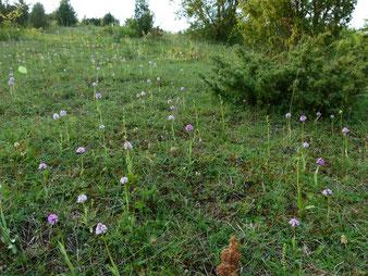 Viele Kalkmagerrasen mit Orchideenvielfalt
