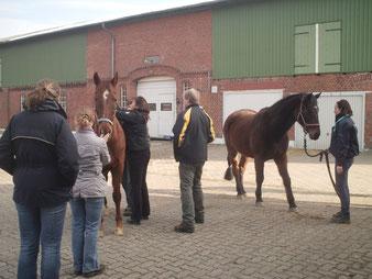 Ausbildung zum pferdeosteopathen physiotherapeuten
