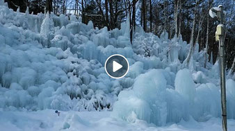 昼間の氷点下の森