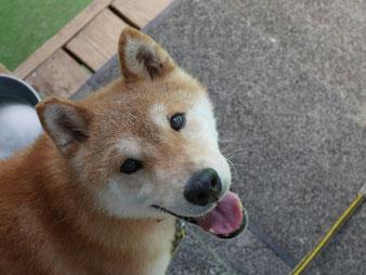 別の犬???