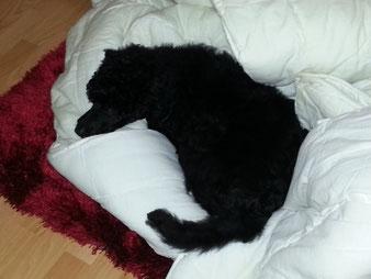 """Schlafi, Schlafi, Schlafi...während """" Mama """" die Betten bezogen hat."""