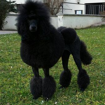meine schwarze Schönheit aus schwarz - lohfarben