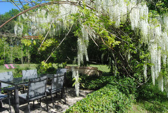 The terrace under the wisteria