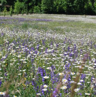 Weiden in het voorjaar