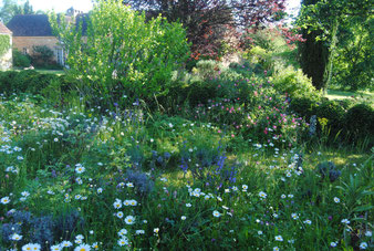 """The """"little garden"""""""
