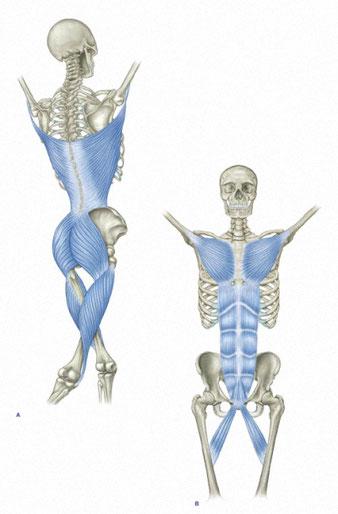 Anatomytrains Tom Meyers