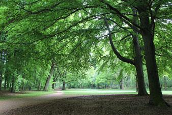 Tiergarten Berlin: Weg zwischen großen Bäumen. Foto: Helga Karl