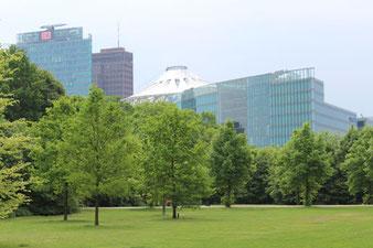 Tiergarten Berlin: Rasen und Bäume vor den Hochhäusern Potsdamer Platz. Foto: Helga Karl