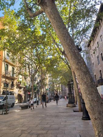 Барселона, Борн, экскурсии пешеходные