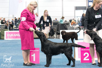 """Tian"" winning CAC at German Winner Show! <3"