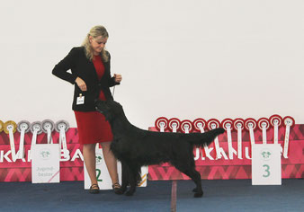 """Miles"" won the Breed & Group-3 !!"