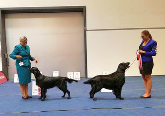 """Donna"" won BEST OF BREED!! <3"