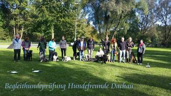 Der Schapendoes eignet sich auch für Hundesport