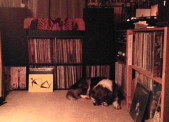 モコは大音量が苦手。ですが部屋にいてほしいので私が根負けして音を下げます(笑)