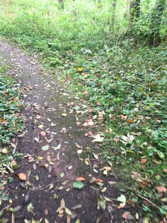 bospad wandelen lopen onbewerkt