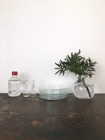 シャーレ、ペトリ皿|Schale, Petri Dish