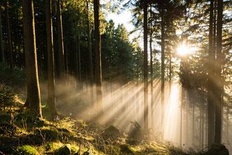 Impressionen: Wald-Nebel_1