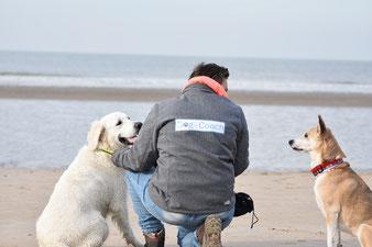 Dog_coach hondentraining puppyles prive les