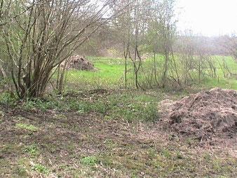 Le terrain fin 2007 en cours de débroussaillage