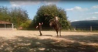Nicht nur Pferde lernen auf Gut Charlottenthal. Zentral ist ebenfalls die Ausbildung der Reiter.