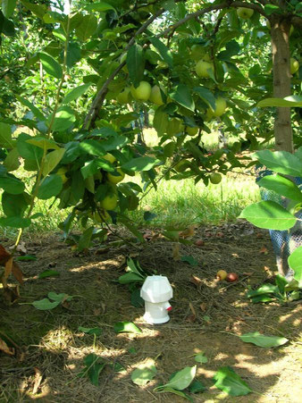 Sonde Diviner 2000 installée dans le sol pour préparer vos irrigations de cultures - Agralis Conseils