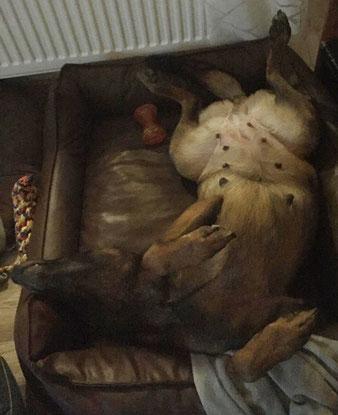 Langsam drückt der Bauch... Penila's Babybauch - Schlafposition