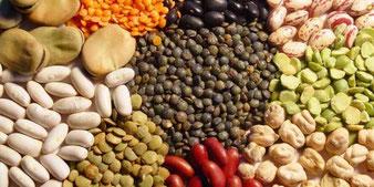 legumes secos www.agriportugal.com