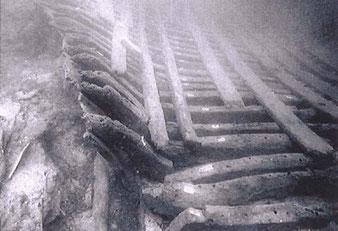 L'épave in situ. Une partie de la série de membrures avec son plancher de caIe (d. A. Chéné, Institut d'études méditerranéennes, Aix-en-Provence)
