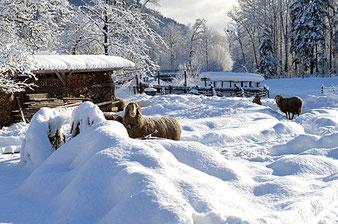 Der Pechlerhof Oberaudorf am Auerbach im Winter