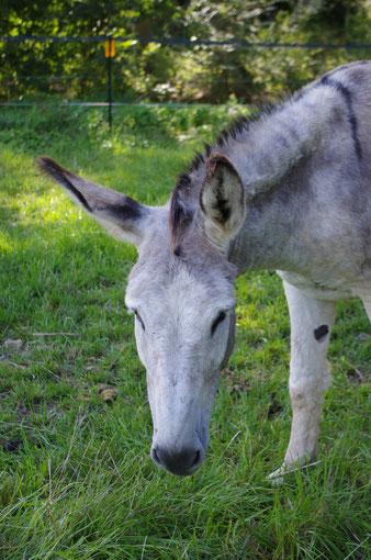 Oscar, common donkey, 2002