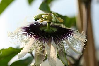 Blütenaufbau