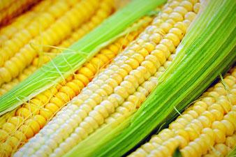 Fruchtstand vom Mais