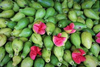 Guaven-Ernte rotfleischig