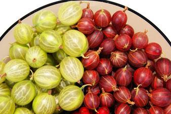 купить саженцы разных сортов смородины в Клину