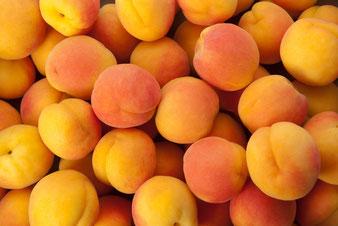 где купить в Клину районированные саженцы абрикосов