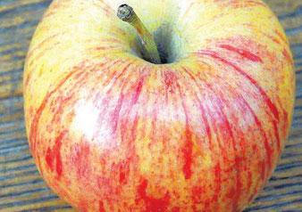 саженцы яблони Анис Полосатый