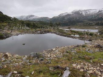 Beaver dam, Dientes de Navarino, Chile