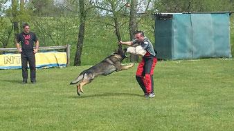 Schaeferhunde