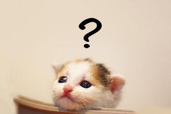 ?マークを浮かべる猫