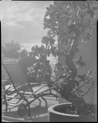 Grossformatfotografie mit Altglas: Bei Gegenlichtaufnahmen führen die unvergüteten Gläser zu Überstrahlungen, Foto: bonnescape.de