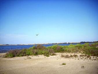 Las lagunas de Mata y  Torrevieja-Alicante