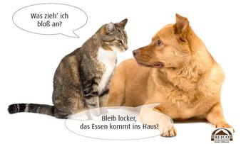 Kostenloses Testessen für Hunde Katzen und Schnupperpakete Hundefutter Katzenfutter