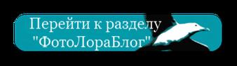 "Перейти к разделу ""ФотоЛораБлог"""