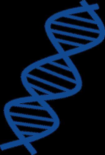 DNA mit Mutation im Exon 11 auf Chromosom 4