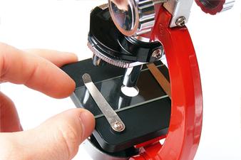 Mikroskop zur Untersuchung der Zellen