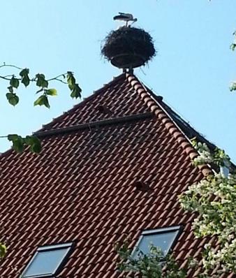 Ein Storch füttert seine Brut