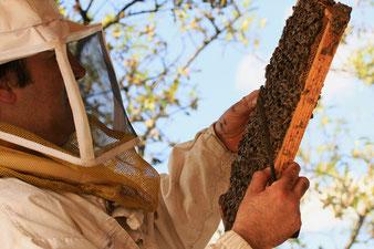 La miellerie des Clauses, Montseret dans l'Aude