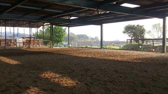 採光も取り入れた、広々とした屋内馬場。