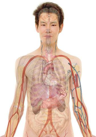 Osteopathie bei Asthma